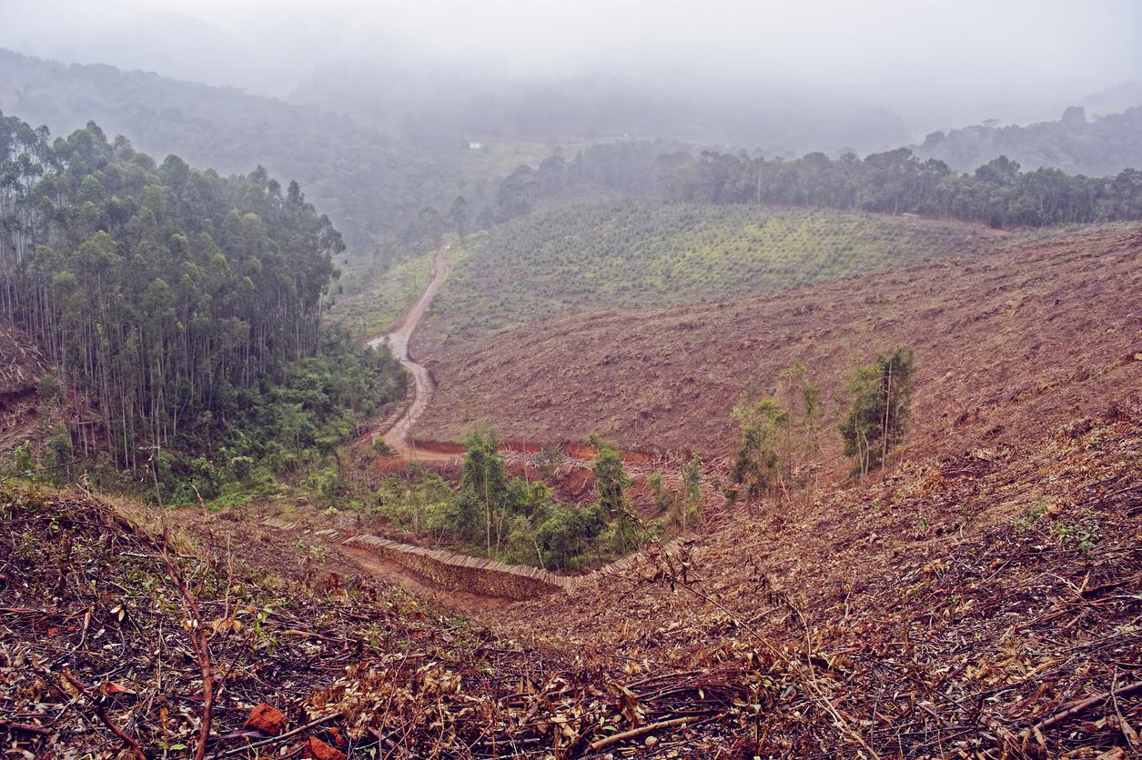 Deforestation-1